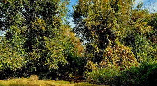 91F0 Păduri ripariene mixte